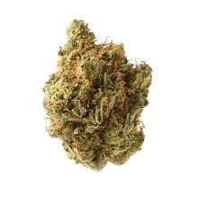 Amsterdam Genetics - Amnesia Haze (5 seeds pack)