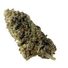 Amsterdam Genetics - Green Magic (5 seeds pack)
