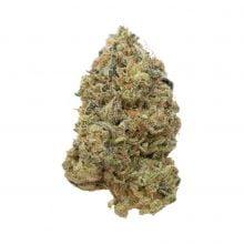 Amsterdam Genetics - Tangerine G13 (5 seeds pack)