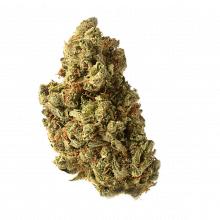 Amsterdam Genetics - Amazing Haze (5 seeds pack)