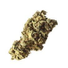 Amsterdam Genetics - Pineapple Kush (5 seeds pack)